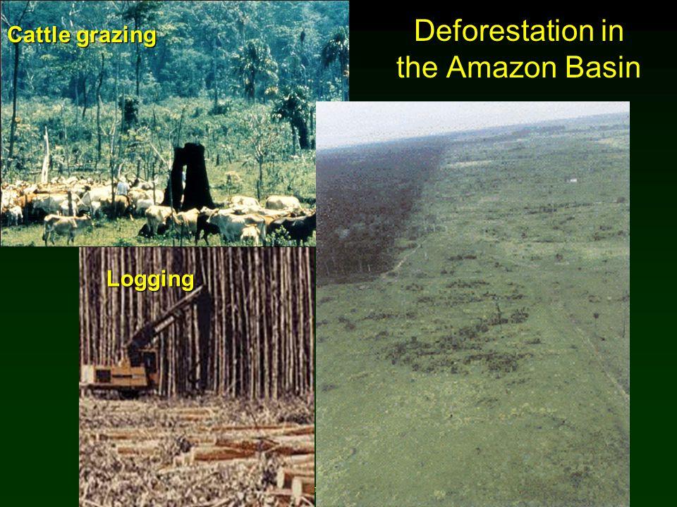 Cunningham - Cunningham - Saigo: Environmental Science 7 th Ed. Deforestation in the Amazon Basin Logging Cattle grazing