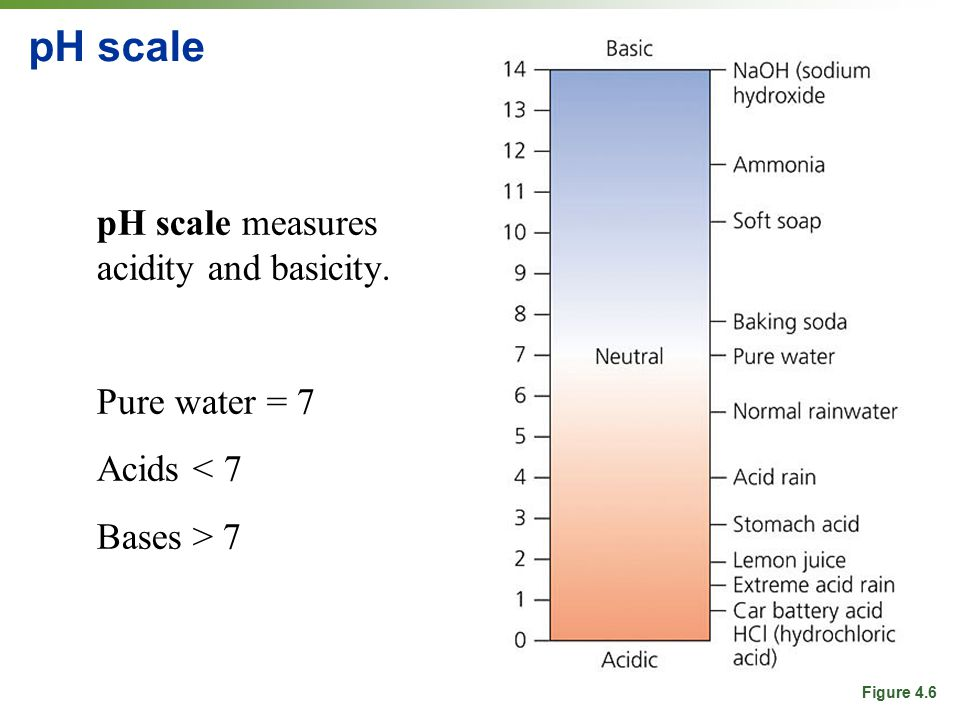 pH scale pH scale measures acidity and basicity. Pure water = 7 Acids < 7 Bases > 7 Figure 4.6