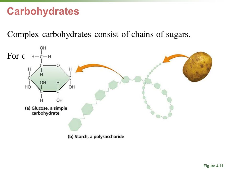 Carbohydrates Complex carbohydrates consist of chains of sugars.
