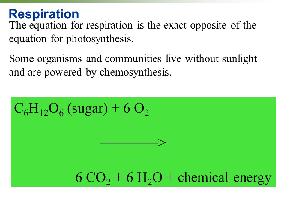 chemical equation chemosynthesis sugar The difference between for profit and non profit schools essay the difference between for profit and nonprofit schools is that nonprofit schools receive their capital through wealthy alumni and donations but for profit schools are invested in and receive their capital from selling shares and enrolling students.
