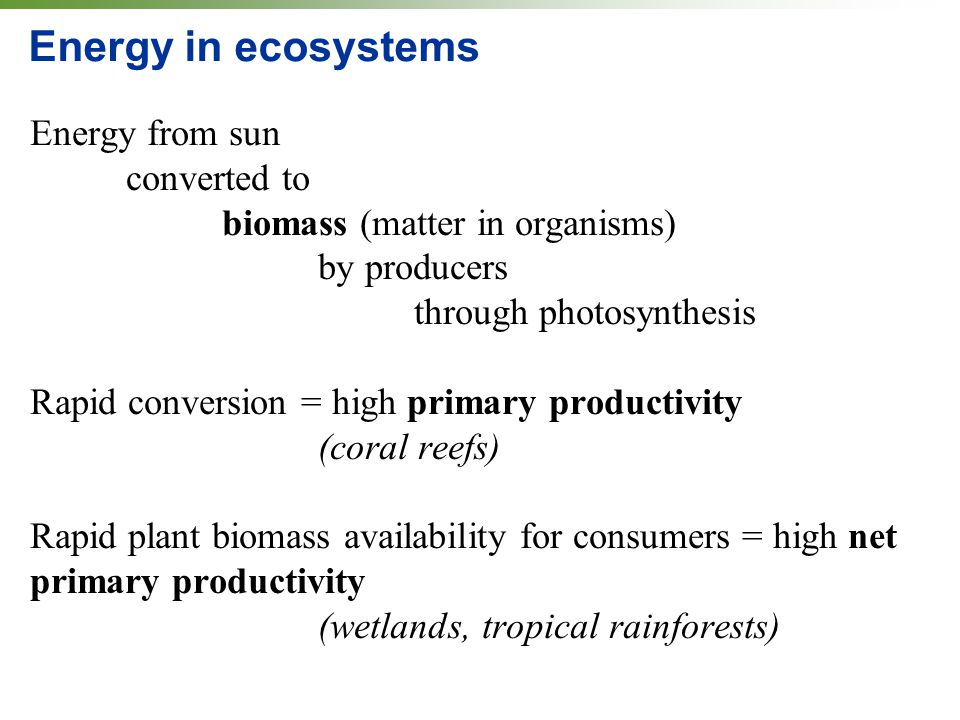 Energy in ecosystems Energy from sun converted to biomass (matter in organisms) by producers through photosynthesis Rapid conversion = high primary productivity (coral reefs) Rapid plant biomass availability for consumers = high net primary productivity (wetlands, tropical rainforests)
