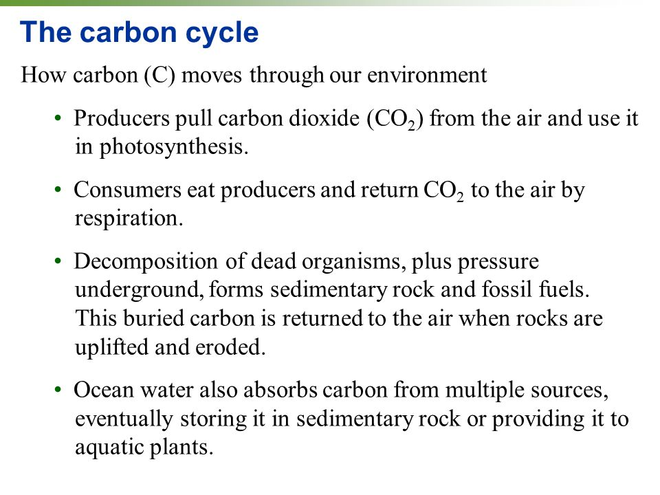 The carbon cycle How carbon (C) moves through our environment Producers pull carbon dioxide (CO 2 ) from the air and use it in photosynthesis.
