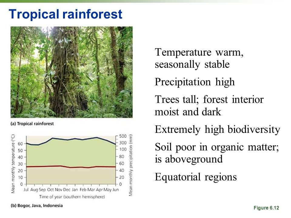 Tropical rainforest Temperature warm, seasonally stable Precipitation high Trees tall; forest interior moist and dark Extremely high biodiversity Soil poor in organic matter; is aboveground Equatorial regions Figure 6.12