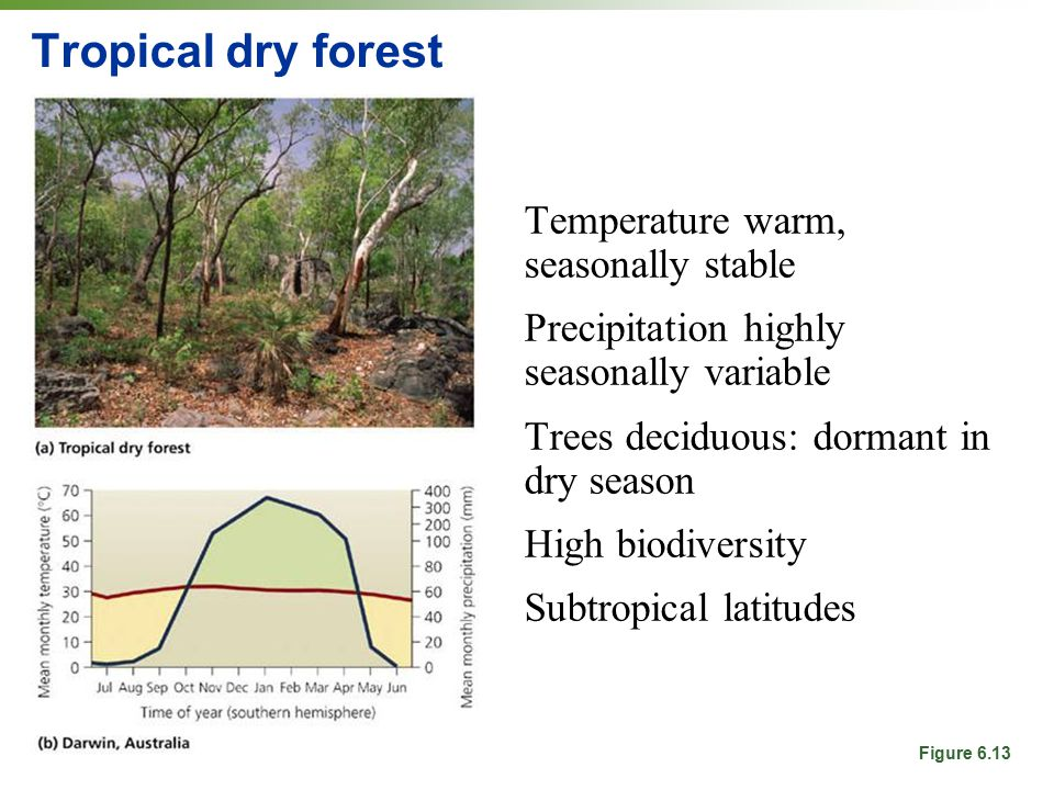 Tropical dry forest Temperature warm, seasonally stable Precipitation highly seasonally variable Trees deciduous: dormant in dry season High biodiversity Subtropical latitudes Figure 6.13