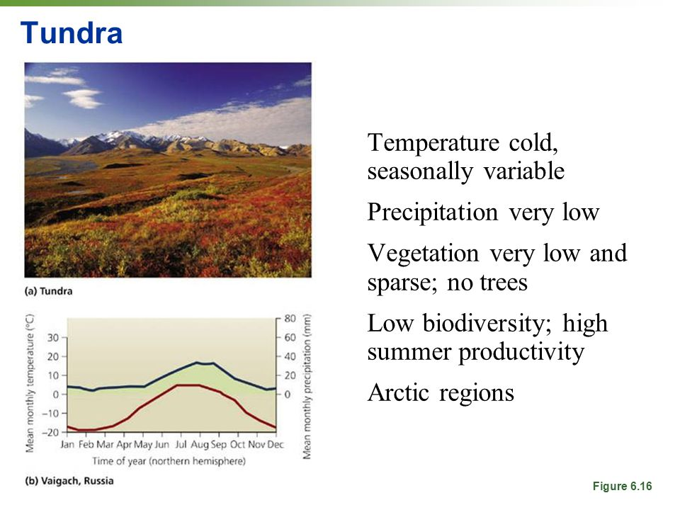 Tundra Temperature cold, seasonally variable Precipitation very low Vegetation very low and sparse; no trees Low biodiversity; high summer productivity Arctic regions Figure 6.16