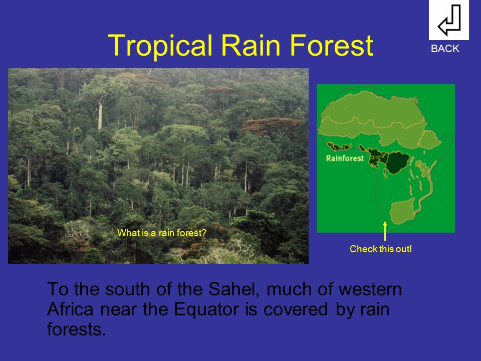 Tropical Rain Forest To the south of the Sahel, much of western Africa near the Equator is covered by rain forests. BACK Check this out! What is a rai
