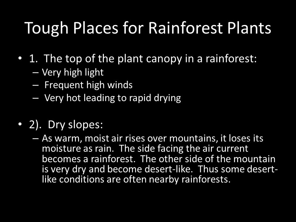 Tough Places for Rainforest Plants 1. The top of the plant canopy in a rainforest: – Very high light – Frequent high winds – Very hot leading to rapid