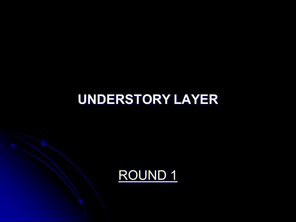 UNDERSTORY LAYER ROUND 1 ROUND 1