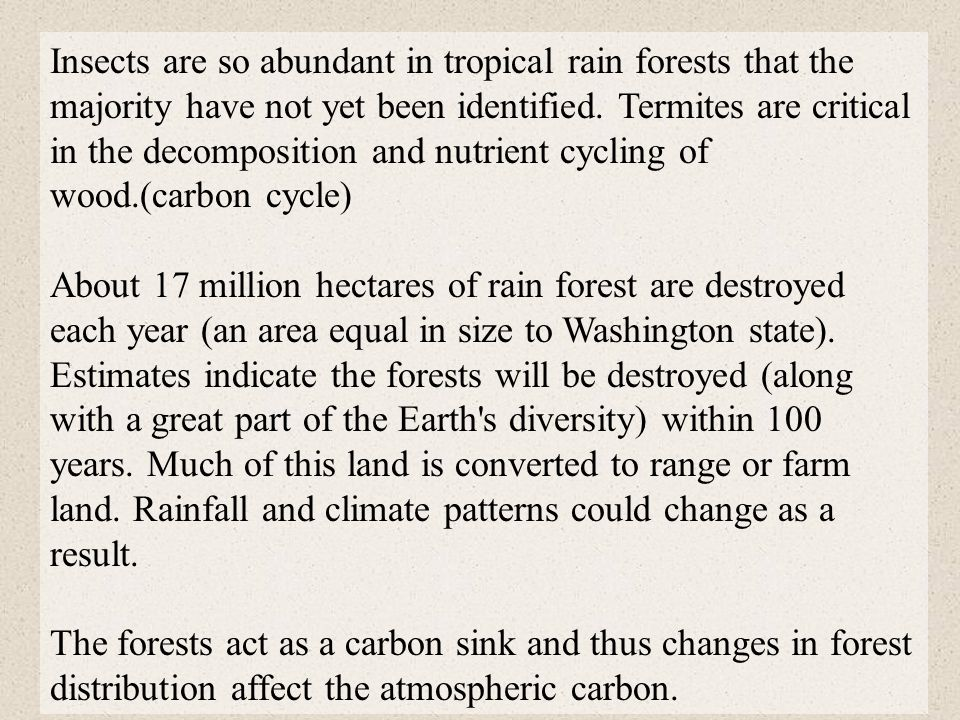 Insects are so abundant in tropical rain forests that the majority have not yet been identified. Termites are critical in the decomposition and nutrie