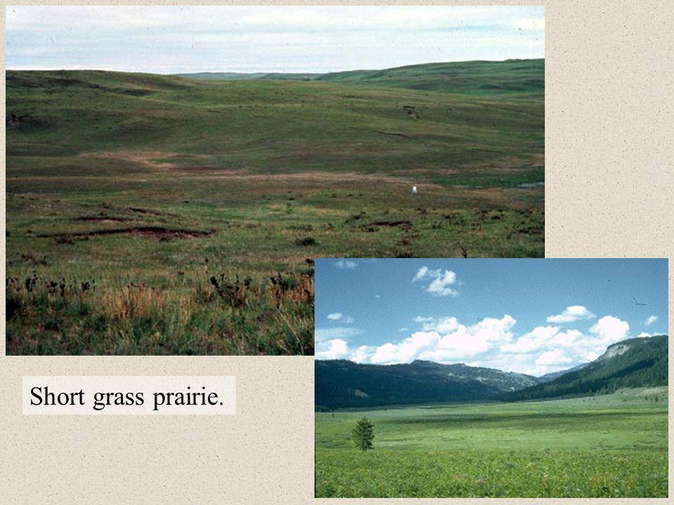 Short grass prairie.