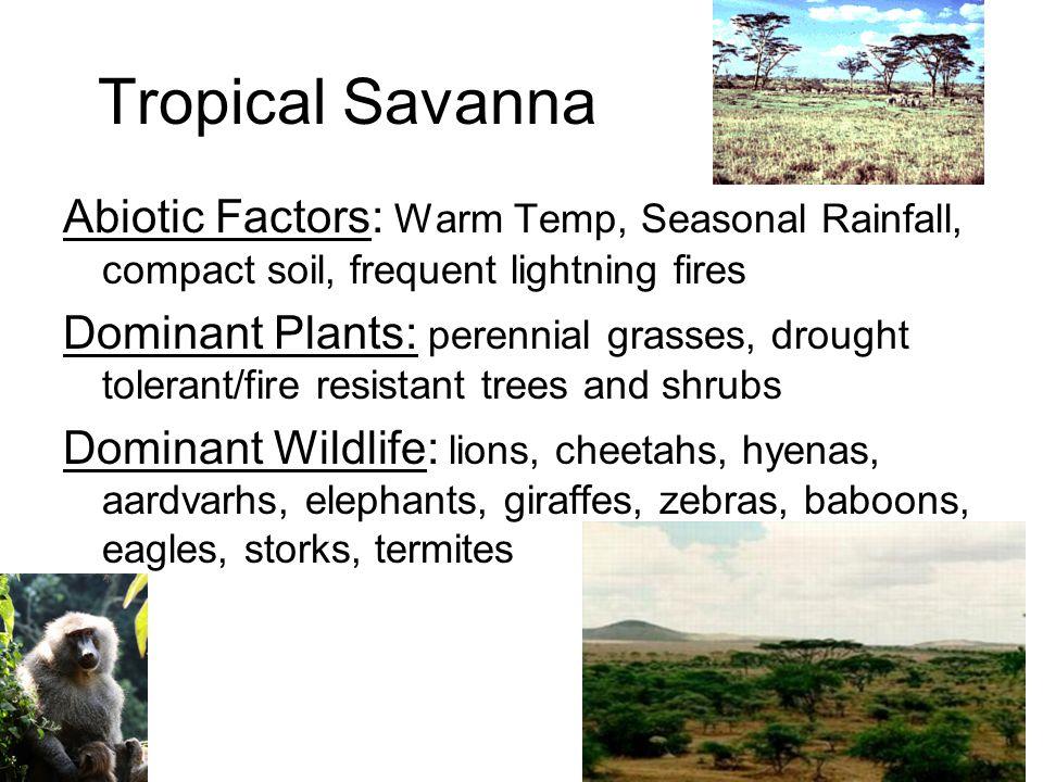 Tropical Savanna Eastern Africa, Southern Brazil, North Australia