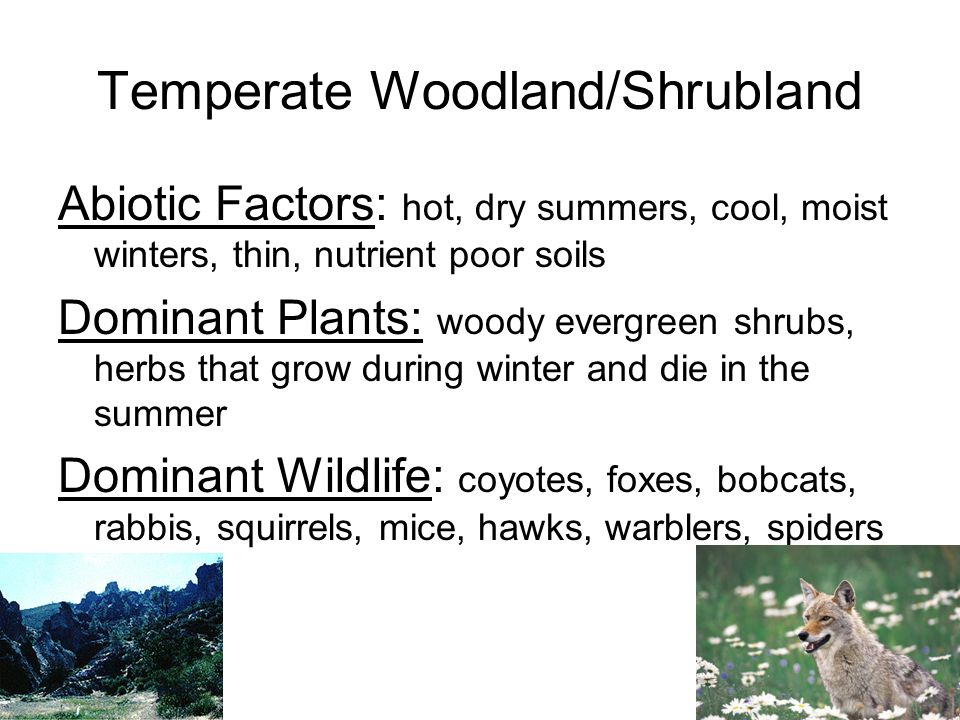 Temperate Woodland/Shrubland Western Coast of North and South America, Mediterranean Sea, South Africa, and Australia
