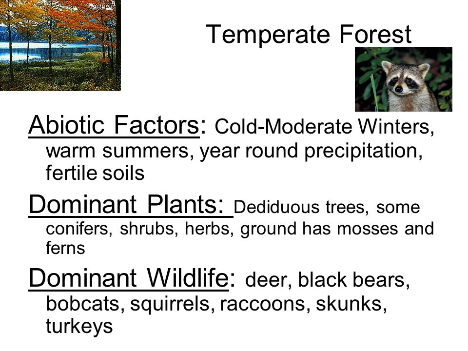 Temperate Forest Eastern U.S., Southeastern Canada, Most of Europe, Part of Japan, China, and Australia
