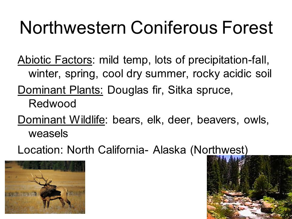 Temperate Forest Abiotic Factors: Cold-Moderate Winters, warm summers, year round precipitation, fertile soils Dominant Plants: Dediduous trees, some conifers, shrubs, herbs, ground has mosses and ferns Dominant Wildlife: deer, black bears, bobcats, squirrels, raccoons, skunks, turkeys
