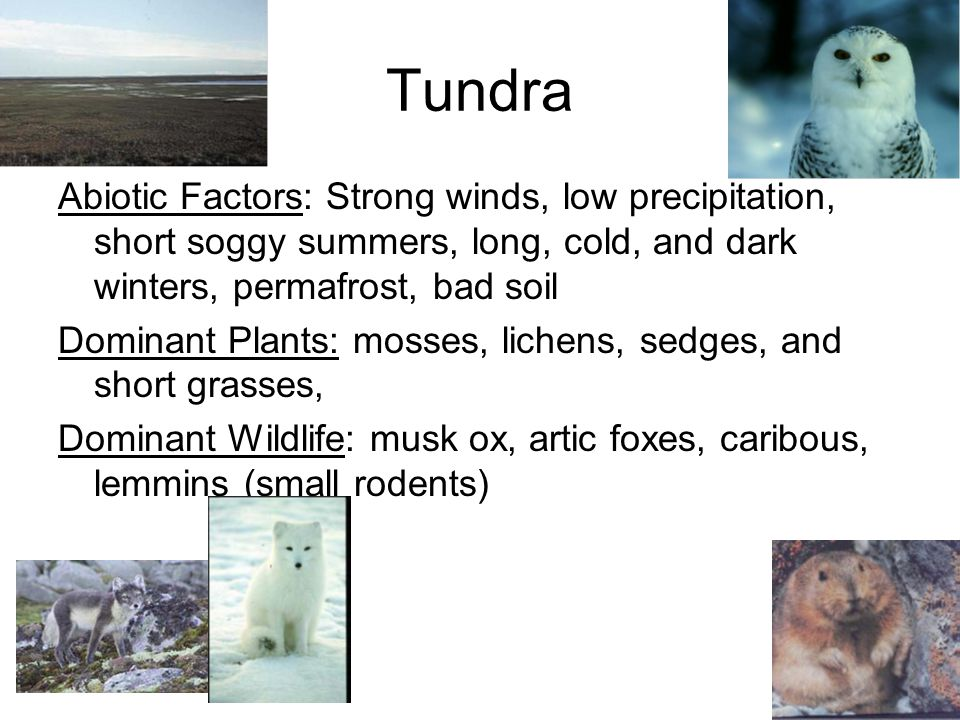Tundra North America, Asia, Europe