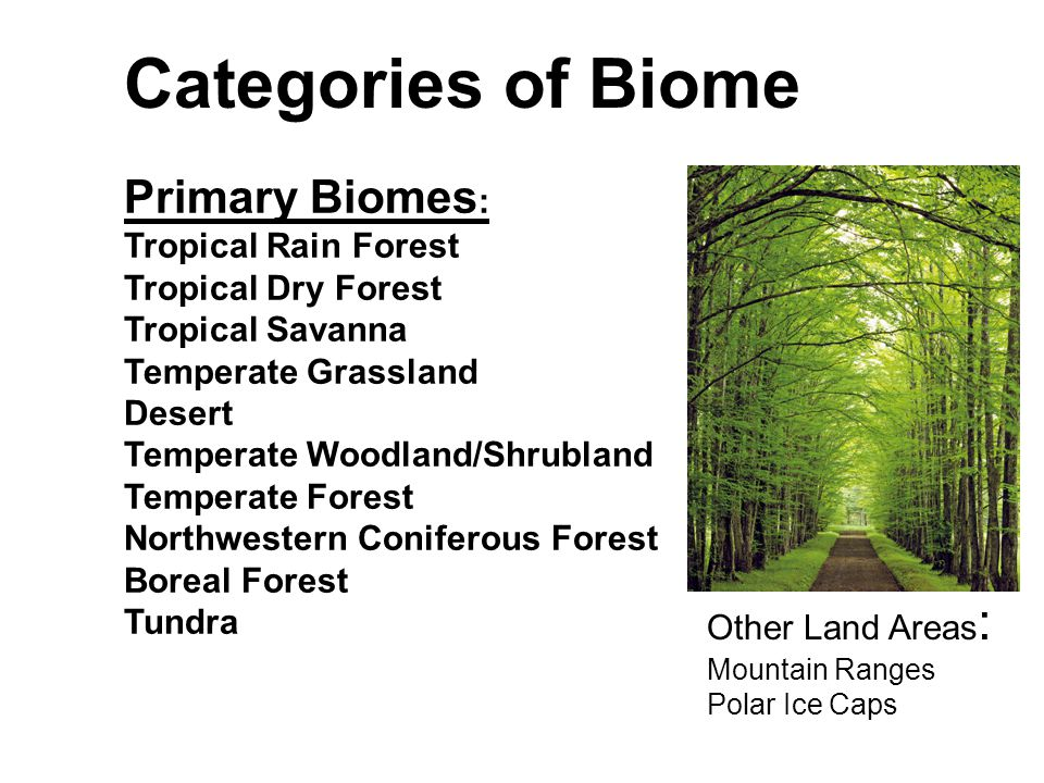 Division into Biomes Latitudes define some biomes