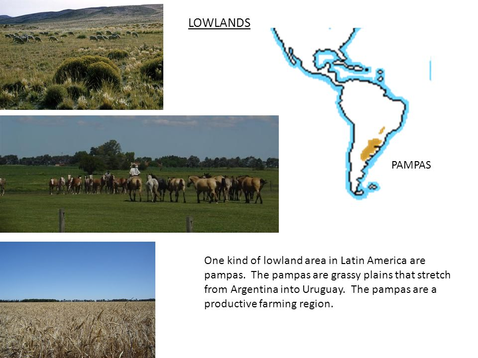 LOWLANDS PAMPAS One kind of lowland area in Latin America are pampas.