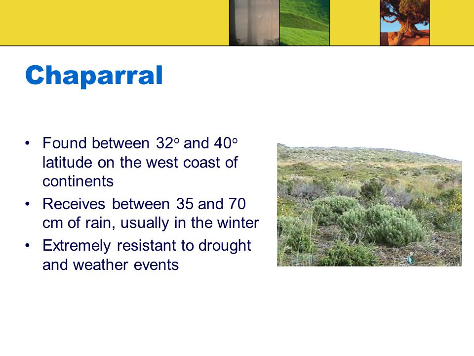 Chaparral Found between 32 o and 40 o latitude on the west coast of continents Receives between 35 and 70 cm of rain, usually in the winter Extremely resistant to drought and weather events