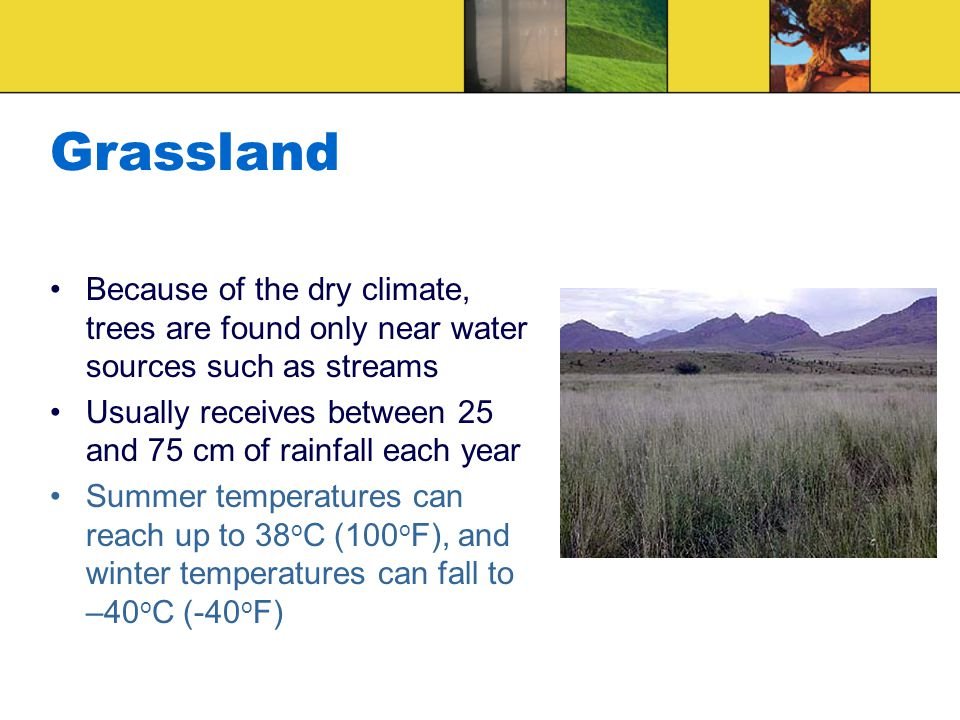 Grassland Because of the dry climate, trees are found only near water sources such as streams Usually receives between 25 and 75 cm of rainfall each year Summer temperatures can reach up to 38 o C (100 o F), and winter temperatures can fall to –40 o C (-40 o F)