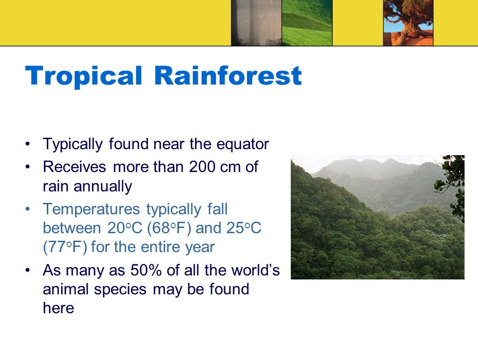 Tropical Rainforest Conditions requiring special adaptations: Lots of precipitation Heavy foliage Distinct layers Humid Others?