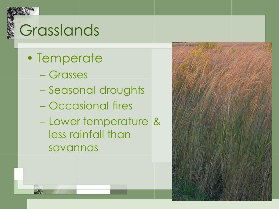 Grasslands Temperate –Grasses –Seasonal droughts –Occasional fires –Lower temperature & less rainfall than savannas