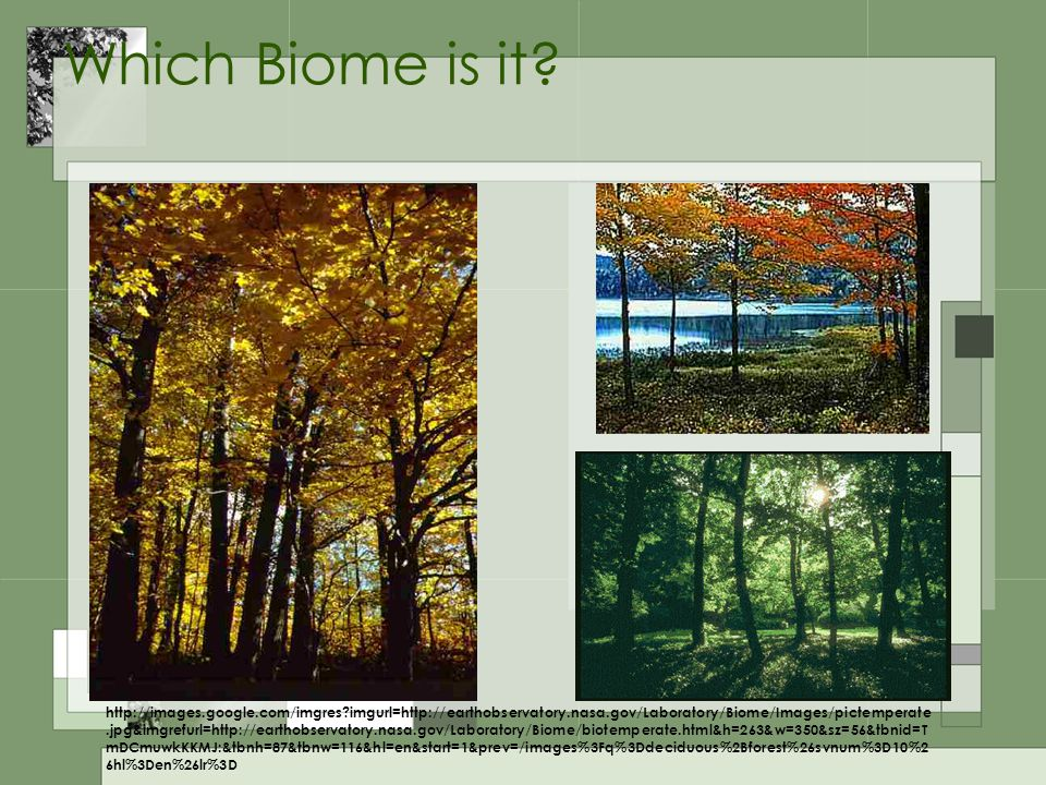 Which Biome is it? http://images.google.com/imgres?imgurl=http://earthobservatory.nasa.gov/Laboratory/Biome/Images/pictemperate.jpg&imgrefurl=http://e