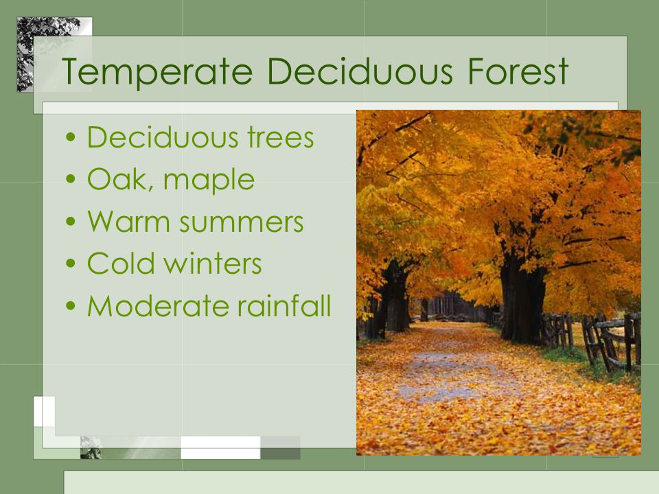 Temperate Deciduous Forest Deciduous trees Oak, maple Warm summers Cold winters Moderate rainfall