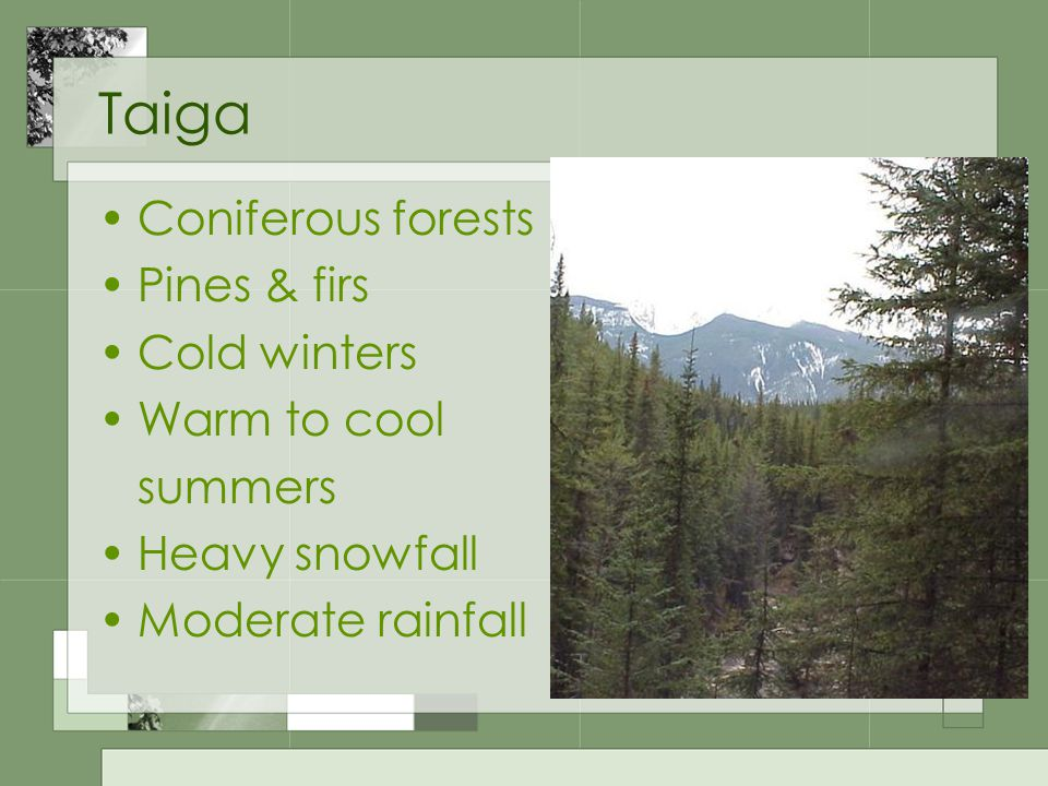 Taiga Coniferous forests Pines & firs Cold winters Warm to cool summers Heavy snowfall Moderate rainfall