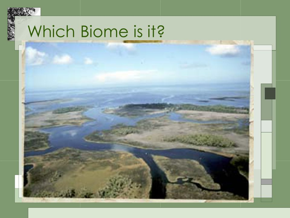 Which Biome is it?