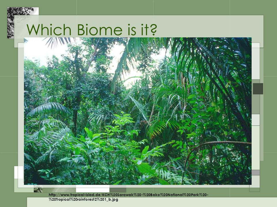 Tropical Rainforest Tall trees High temperature Heavy rainfall