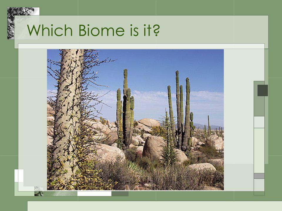 Desert Cactus/succulents Hot days, cold nights Hot summers Little rain