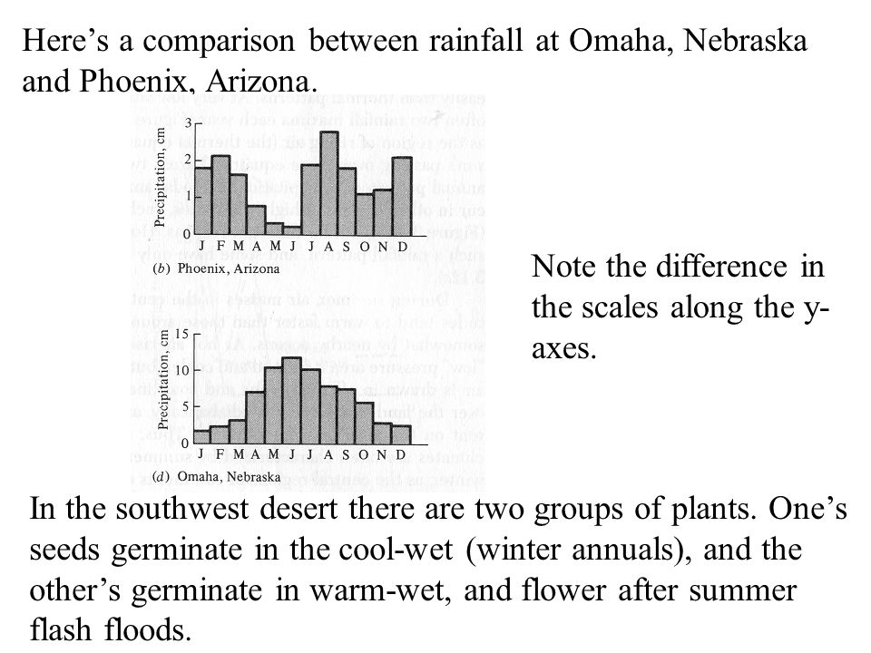 Here's a comparison between rainfall at Omaha, Nebraska and Phoenix, Arizona. In the southwest desert there are two groups of plants. One's seeds germ