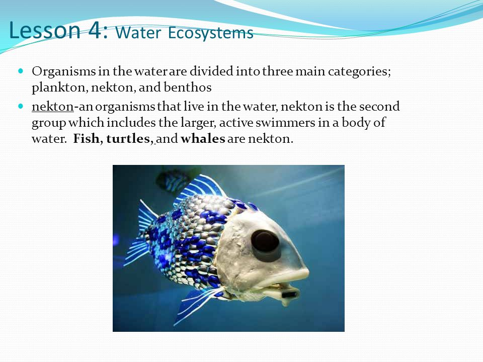 Lesson 4: Water Ecosystems Organisms in the water are divided into three main categories; plankton, nekton, and benthos nekton-an organisms that live