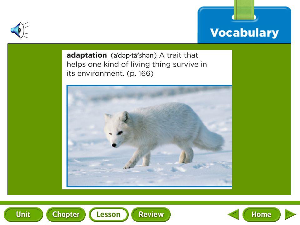 Vocabulary a