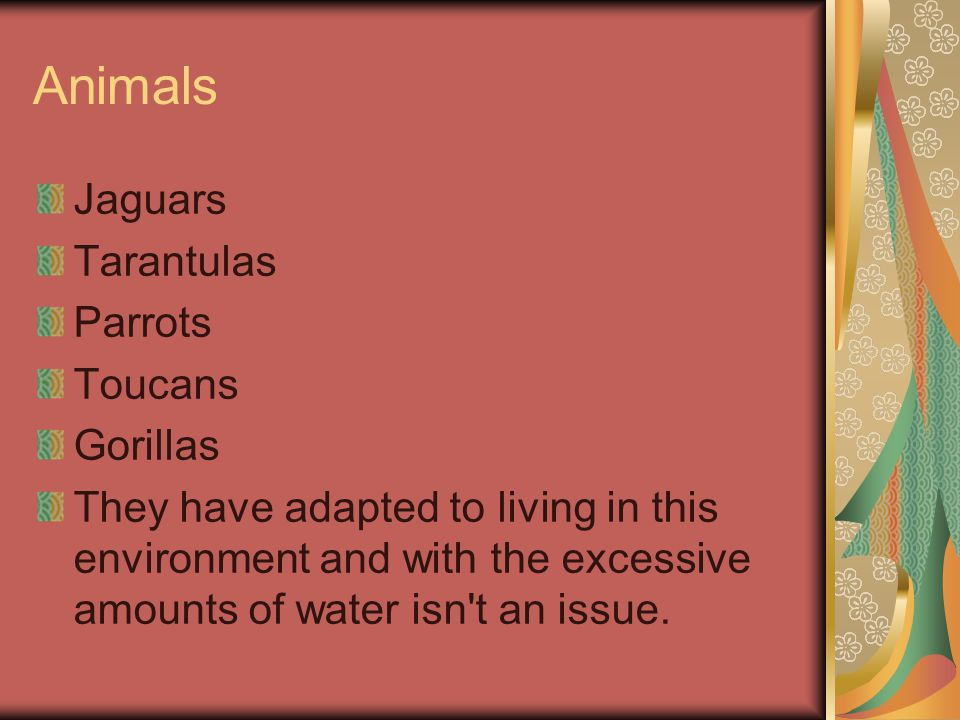 Animals Jaguars Tarantulas Parrots Toucans Gorillas They have adapted to living in this environment and with the excessive amounts of water isn t an issue.