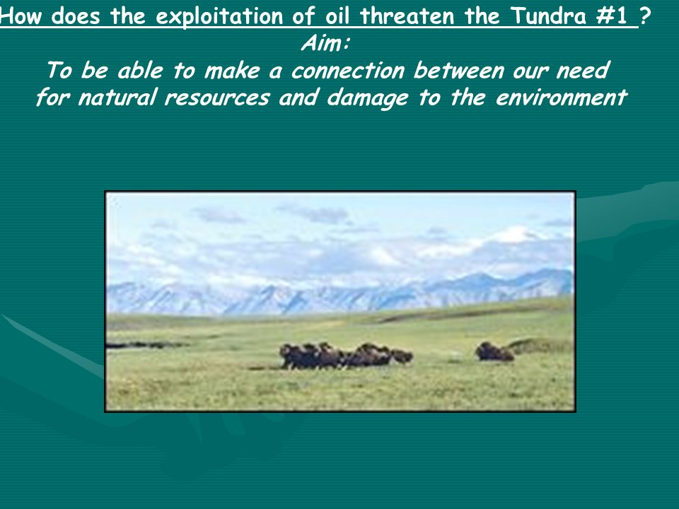 How does the exploitation of oil threaten the Tundra #1 ? Aim: To be able to make a connection between our need for natural resources and damage to th