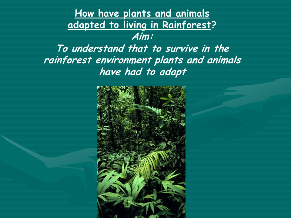 How have plants and animals adapted to living in Rainforest? Aim: To understand that to survive in the rainforest environment plants and animals have