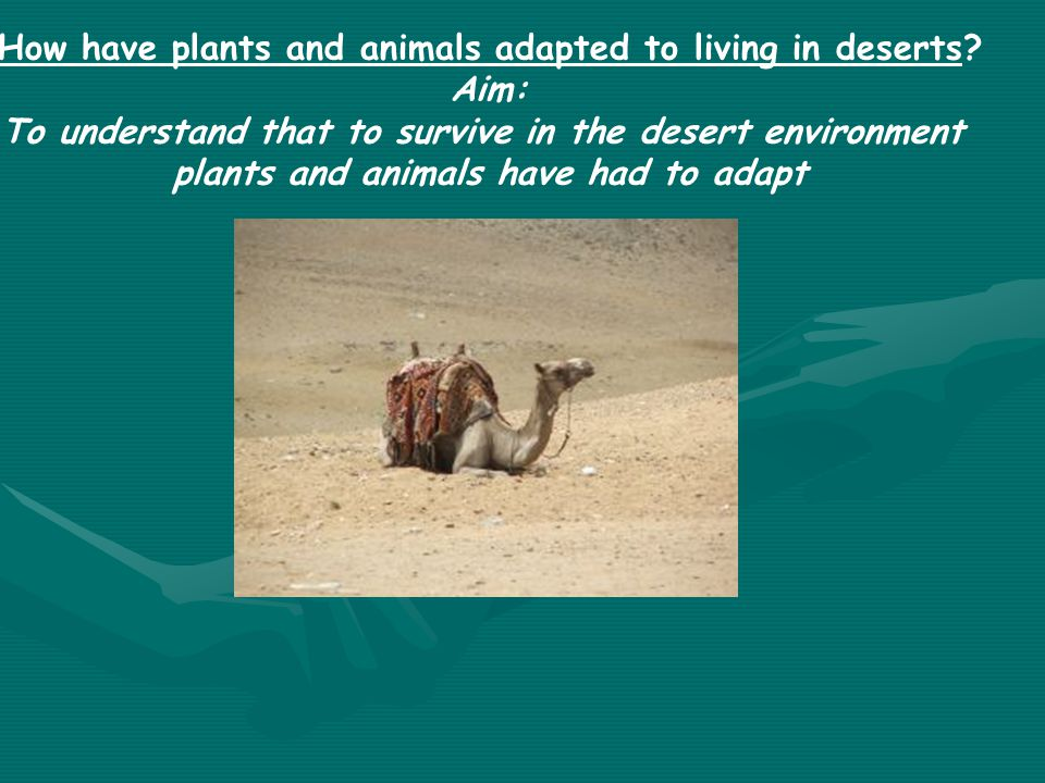 Why are deserts growing? Aim: To learn how the activities of humans are causing deserts to spread