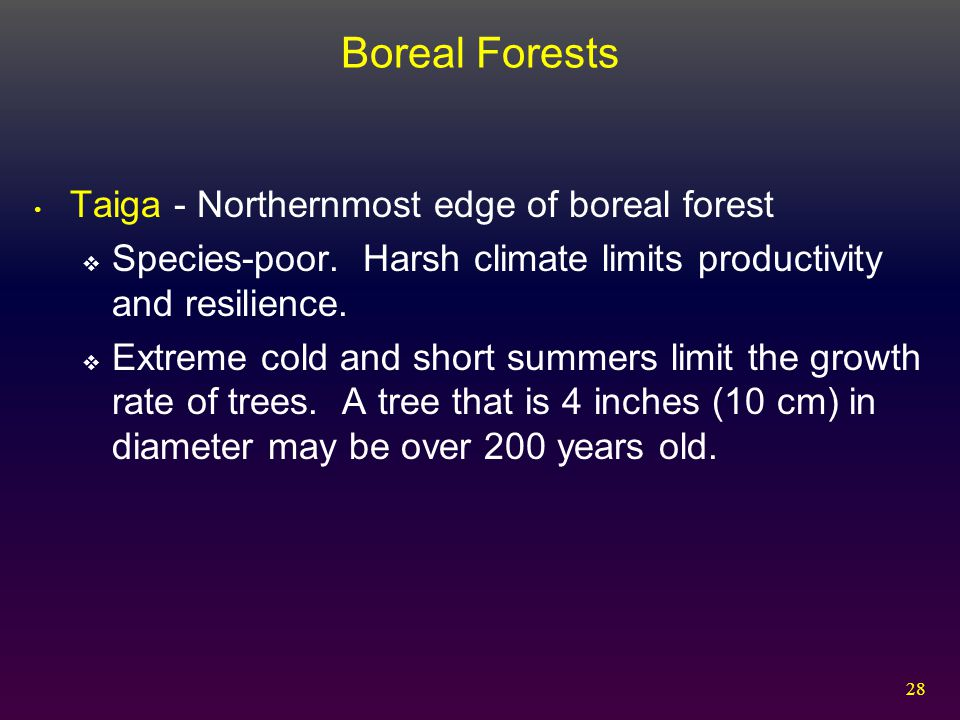 28 Boreal Forests Taiga - Northernmost edge of boreal forest  Species-poor. Harsh climate limits productivity and resilience.  Extreme cold and shor