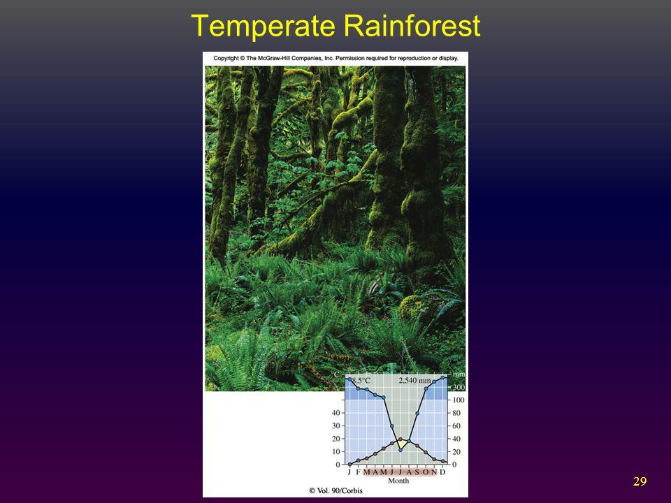 29 Temperate Rainforest
