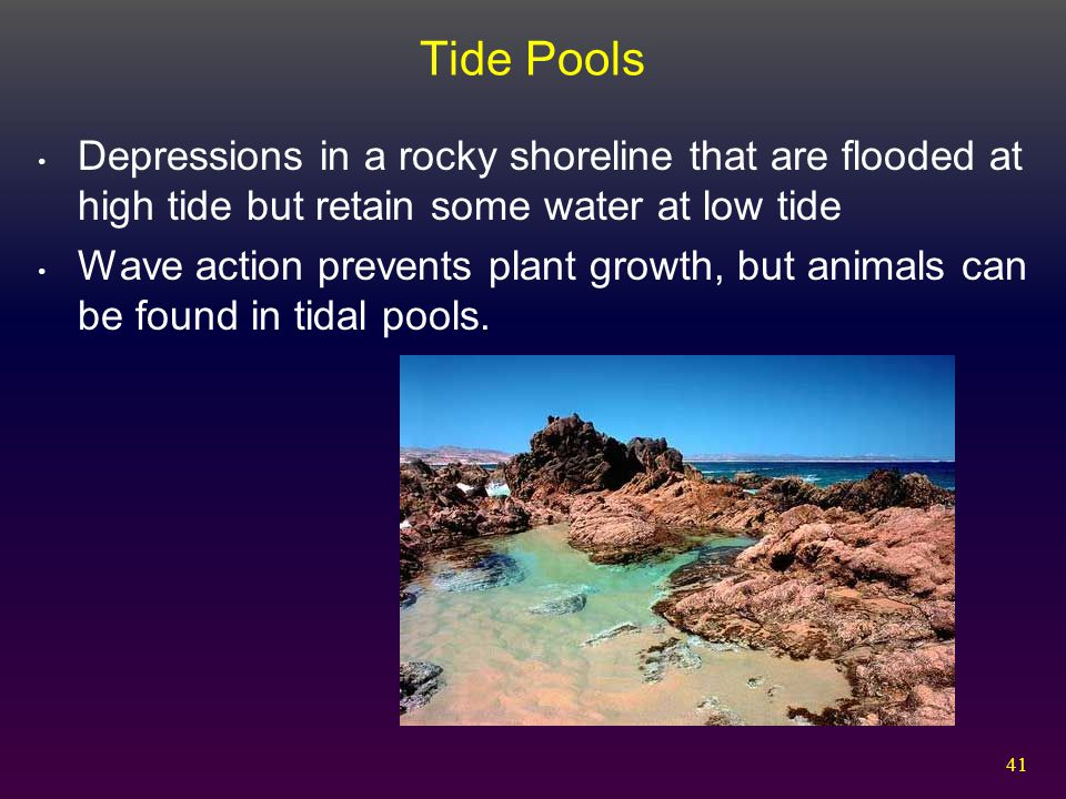 41 Tide Pools Depressions in a rocky shoreline that are flooded at high tide but retain some water at low tide Wave action prevents plant growth, but