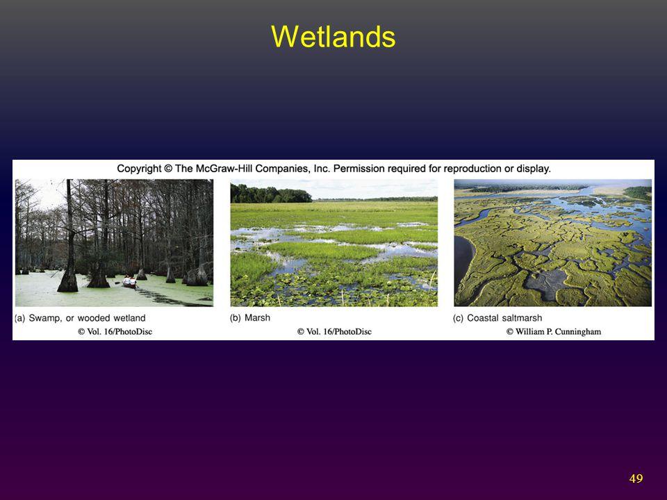 49 Wetlands