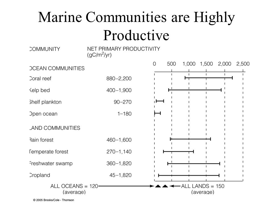 Marine Communities are Highly Productive