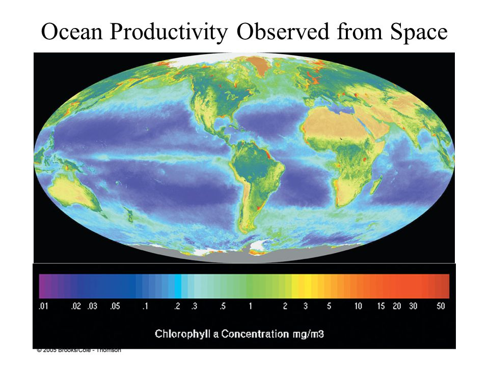 Ocean Productivity Observed from Space