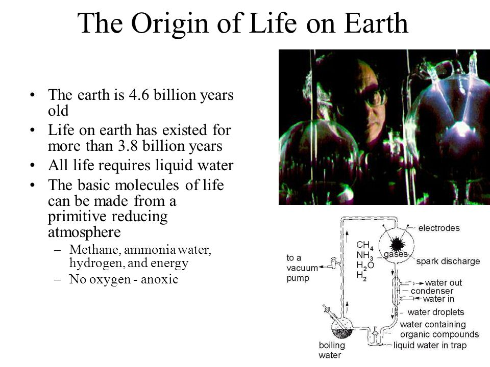 The Origin of Life on Earth The earth is 4.6 billion years old Life on earth has existed for more than 3.8 billion years All life requires liquid water The basic molecules of life can be made from a primitive reducing atmosphere –Methane, ammonia water, hydrogen, and energy –No oxygen - anoxic