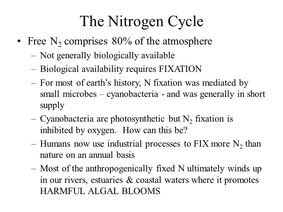 The Nitrogen Cycle Free N 2 comprises 80% of the atmosphere –Not generally biologically available –Biological availability requires FIXATION –For most of earth's history, N fixation was mediated by small microbes – cyanobacteria - and was generally in short supply –Cyanobacteria are photosynthetic but N 2 fixation is inhibited by oxygen.