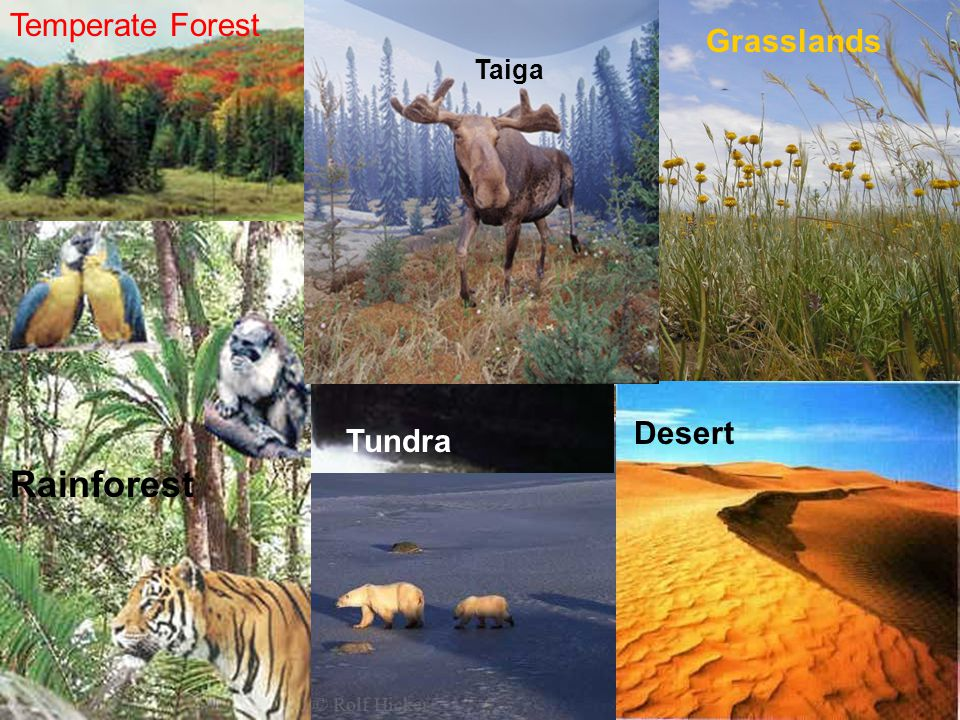 Rainforest Temperate Forest Tundra Taiga Desert Grasslands