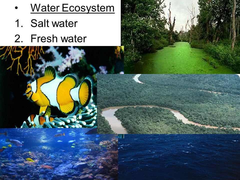 Water Ecosystem 1.Salt water 2.Fresh water