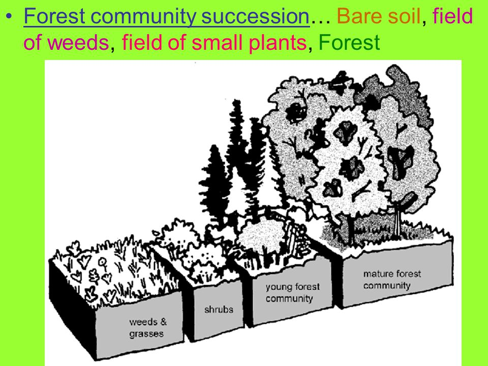 Forest community succession… Bare soil, field of weeds, field of small plants, Forest