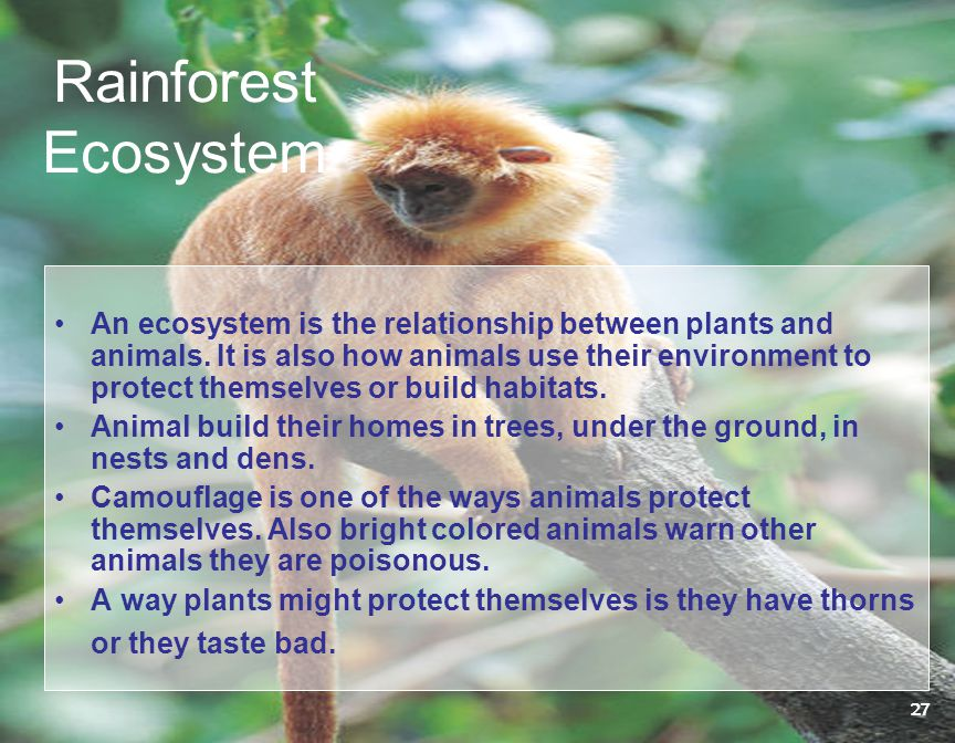 Rainforest Ecosystem An ecosystem is the relationship between plants and animals. It is also how animals use their environment to protect themselves o